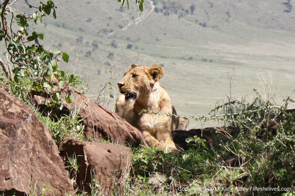 Safari Day 2: Ngorongoro Crater