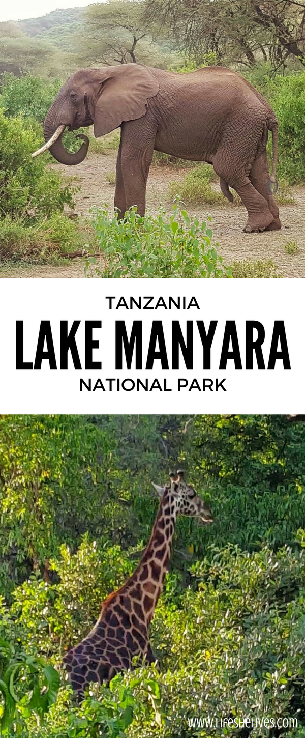 Safari Day 1: Lake Manyara National Park